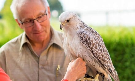 Falcon Firmenmaskottchen Falca besucht die VISION